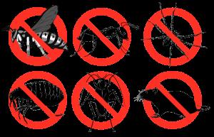 شركة مكافحة حشرات بالدمام والتخلص منها