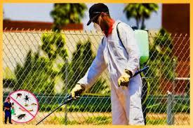 شركة رش مبيدات بضرماء