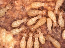 شركة مكافحة النمل الابيض غرب الرياض