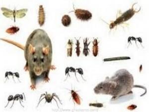 شركة مكافحة حشرات ببقيق