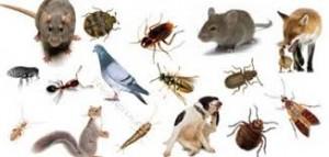 شركة رش الفئران بالظهران