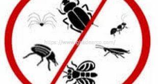 شركة مكافحة النمل الابيض بالظهران