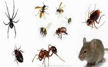 شركة رش النمل الابيض ببقيق