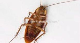 شركة مكافحة حشرات بسيهات