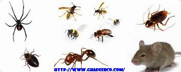 شركة مكافحة النمل الأبيض بالحزام الذهبي