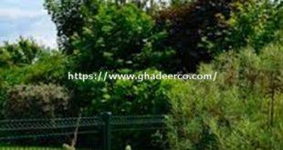 شركة تنسيق حدائق بالحزام الذهبي