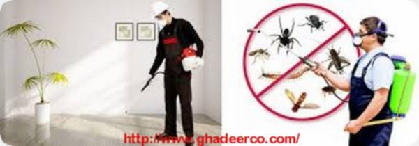 شركة رش النمل الأبيض بالقصيم