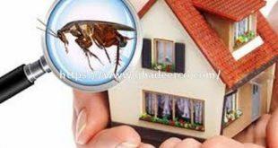 شركة المثالية لمكافحة الحشرات بالدمام