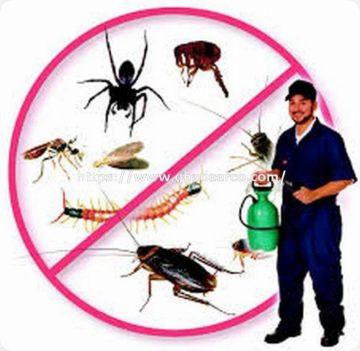 شركة ماسه لمكافحة الحشرات بالدمام