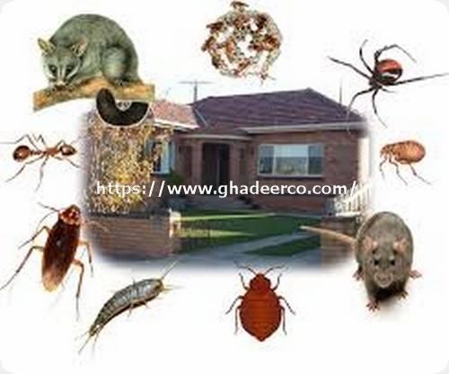 شركة ماسه لمكافحة الحشرات بالقطيف