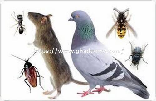 شركة امست لمكافحة الحشرات بالجبيل