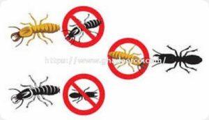شركة مكافحة النمل الابيض بصفوى