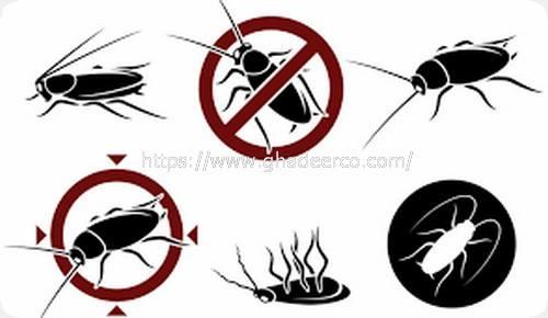 شركة المثالية لمكافحة الحشرات بالخبر