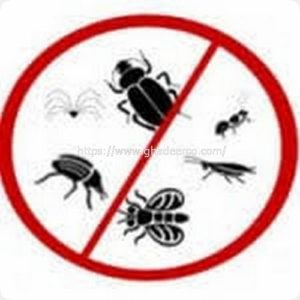 شركة ماسة لمكافحة الحشرات بالخبر