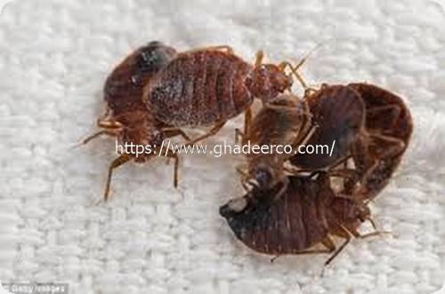 شركة المثالية لمكافحة الحشرات بالجبيل