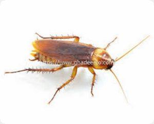 شركة امست لمكافحة الحشرات بالخبر