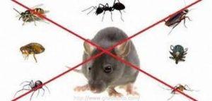 شركة رش الفئران بعنك