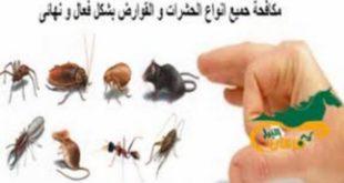 شركة رش الفئران ببريدة