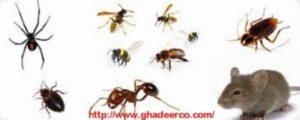 شركة مكافحة النمل الأبيض بالرس