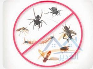 شركة المثالية لمكافحة الحشرات بالظهران