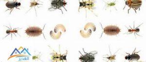الحشرات المنزلية الصغيرة جدا
