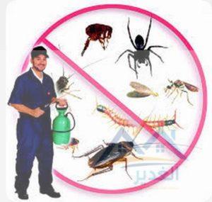 شركة رش النمل الابيض بالاحساء